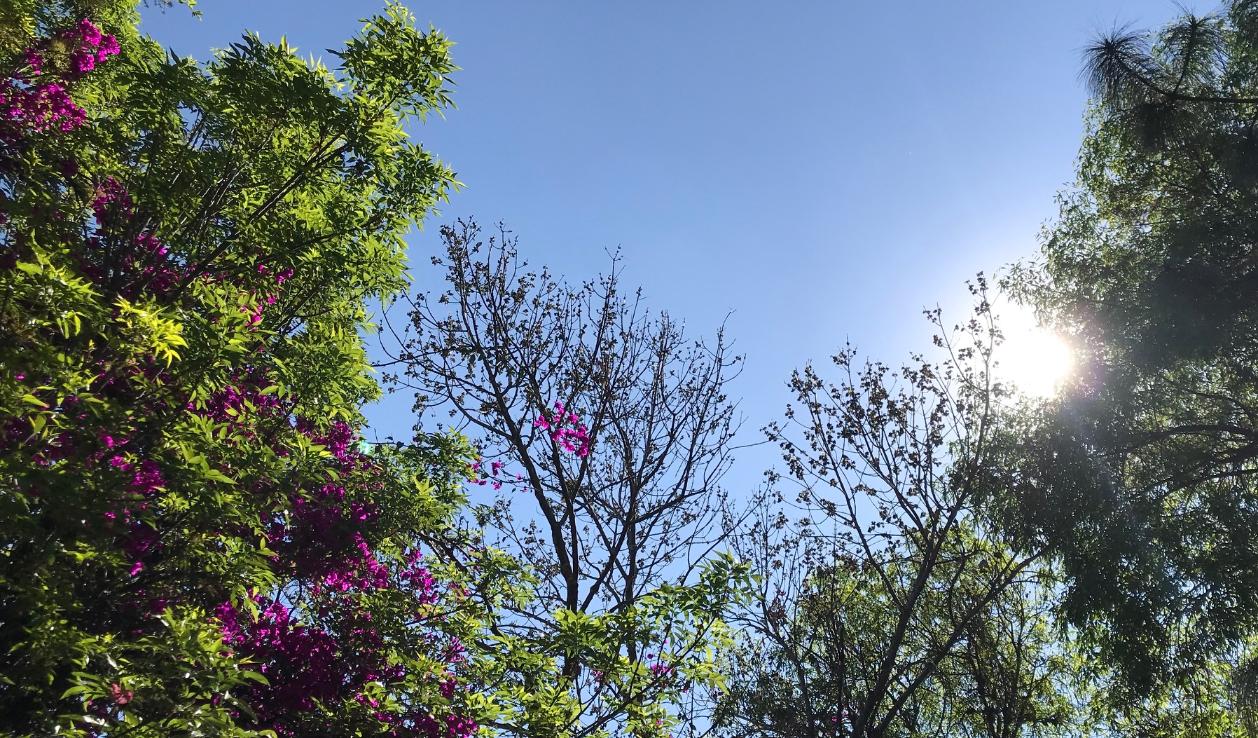 The Trees, The Sun, TheSky